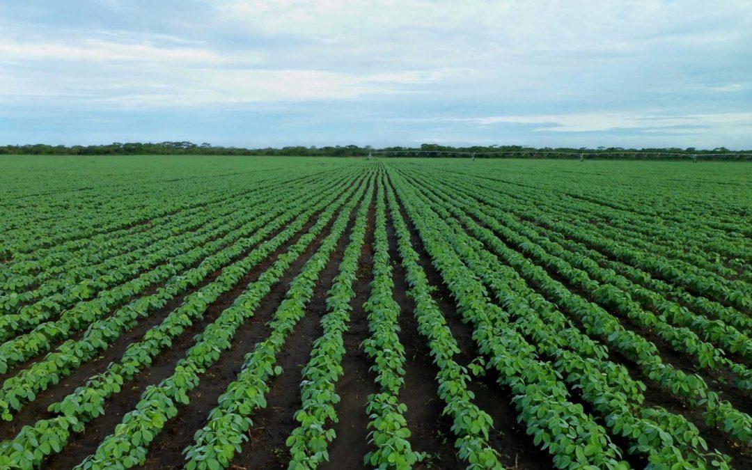 Sojabohnen-Anbau