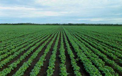 Sojaprotein-Markt wächst auf ca. 13 Mrd. USD